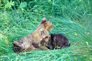 Mom cat with her kitten on the grass