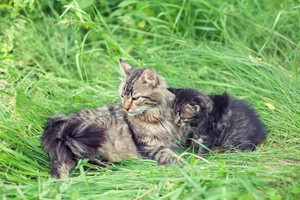 Mom cat with lttle kitten on the grass