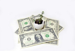 Money Around Plant