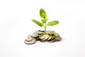 Money Plant 184