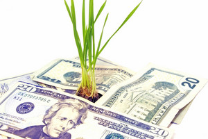 Money Plant Concept