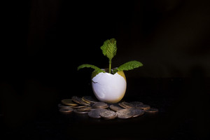 Money Plant Isolated On Black