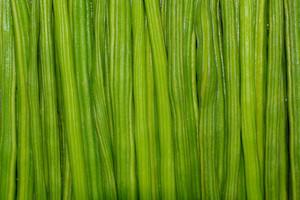 Moringa Drumstick Pile