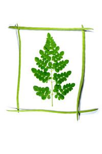 Moringa Framed On Drumstick