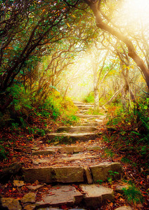 Morning sun rays shine on forest pathway
