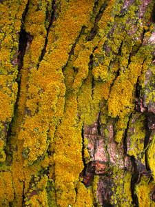 Moss 1 Texture