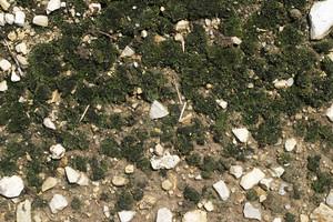 Moss 11 Texture