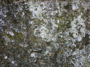 Moss 4 Texture