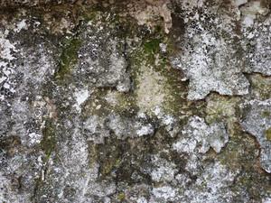 Moss 6 Texture