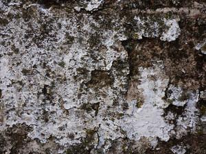 Moss 7 Texture