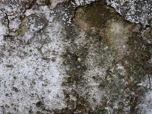 Moss 8 Texture