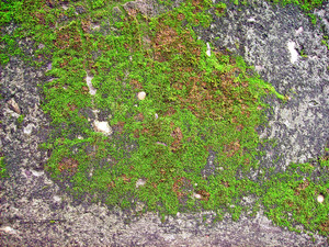 Moss_background