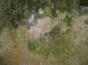 Moss_dirty_background