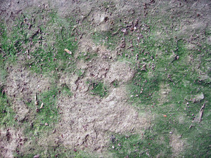 Moss_texture