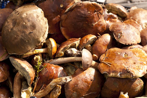 Mushrooms From The Darss Forest