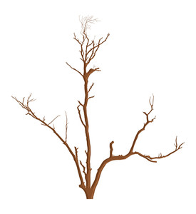 Nature Garden Dead Tree Vector