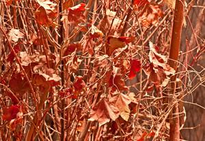 Nature Seasons Autumn Leaves