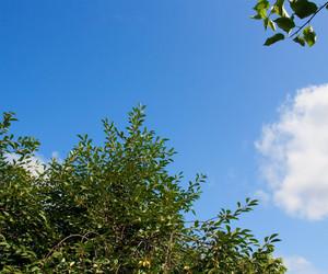 Nature Sky Background