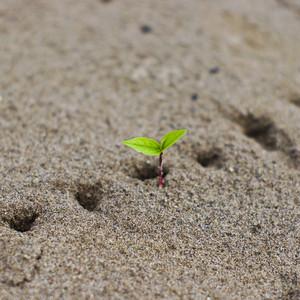 new born plant on sand