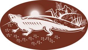 New Zealand Tuatara