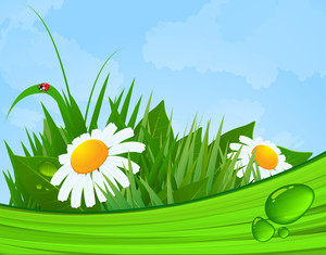 Nice Summer Morning. Daisy Flowers. Vector Background.