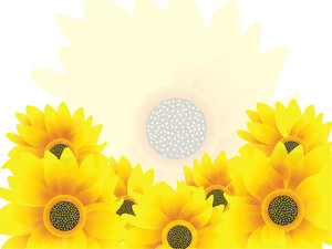 Nice Sunflowers Yellow Vector