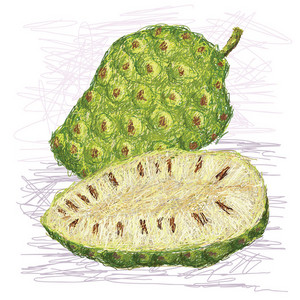 Noni Fruit Cross Section