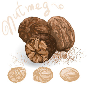 Nutmeg. Vector.