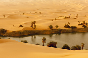Oasis in a vast, sandy desert