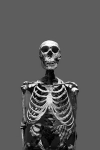 Old bony skeleton isolated over a gray background in black and white.
