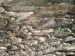 Old Wood Bark  Texture