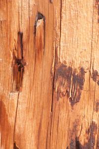 Old Wood Grunge