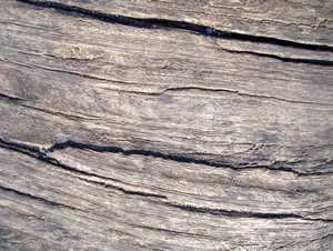 Old_wood_surface