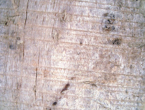 Old_wooden_texture_surface_background