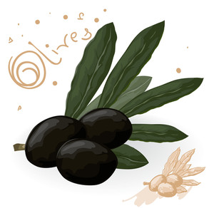 Olive Branch With Three Black Olives. Vector.