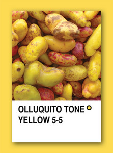 Olluquito Tone Yellow. Color Sample Design
