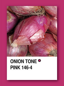 Onion Tone Pink. Color Sample Design
