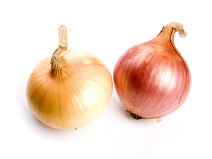 Onions Studio Isolated On White
