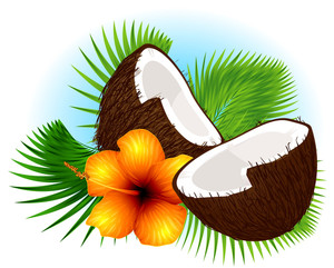 Opened Coconut And Tropical Flower. Vector.