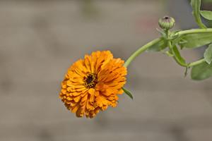 Orange Flower Twig