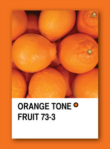 Orange Tone Fruit. Color Sample Design