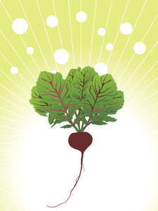 Organic Beetroot Close Up Illustration