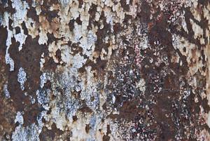Paint Peeling 26 Texture