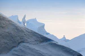 Pair of birds perched on an iceberg at dawn