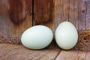 Pair Of Eggs