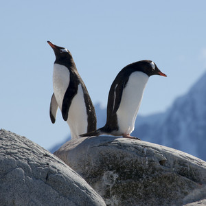 Pair of penguins standing on the rocks