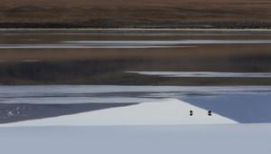 Pair of seabirds standing in sunlit, smooth waters