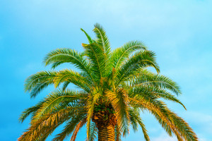 Palm tree against blue sky