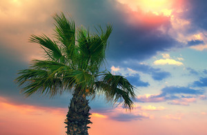 Palm tree against dramatic sky