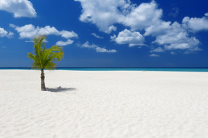 Palm tree along a tropical beach